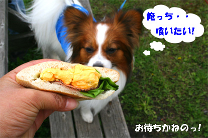 ufufu080430-1.jpg