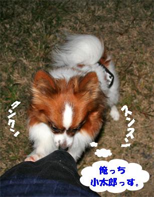 ufufu081101-1.jpg