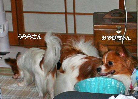 uramiya070818-1.jpg