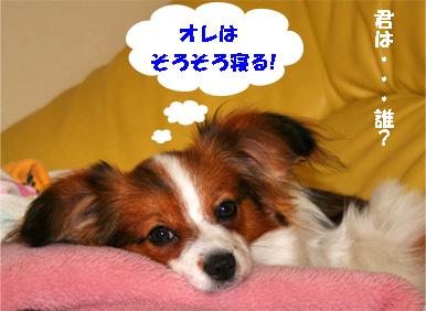 wan080326-1.jpg