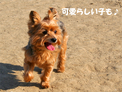 youki071126-1.jpg