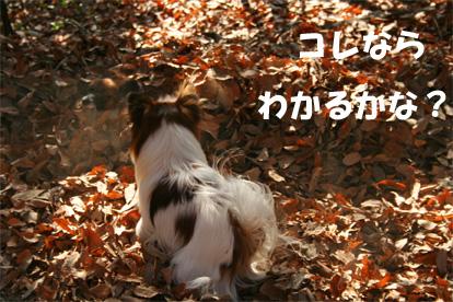 yuukota061225-2.jpg