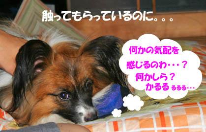 yuzu0170818.jpg