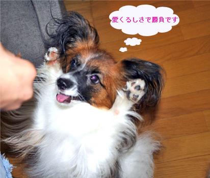 yuzu060913-2.jpg