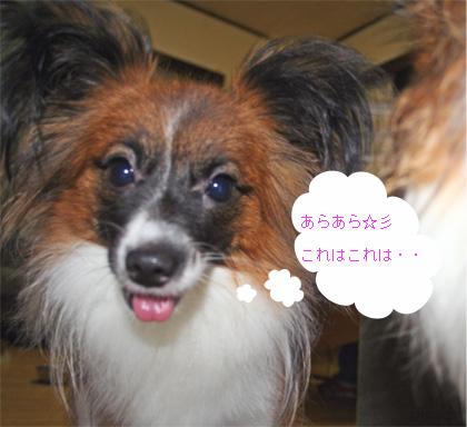 yuzu060915-1.jpg