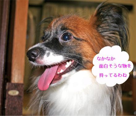 yuzu060915-2.jpg