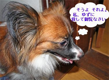yuzu060915-3.jpg