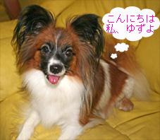 yuzu060916-1.jpg