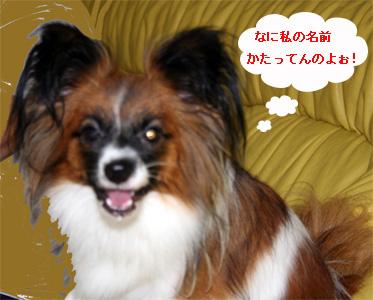 yuzu060916-3.jpg