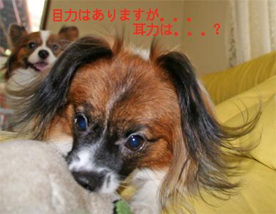 yuzu060919-10.jpg