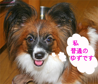 yuzu060919-12.jpg