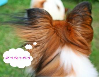 yuzu060919-2.jpg
