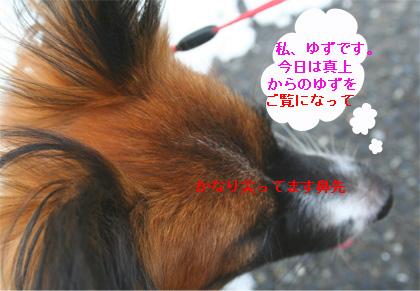 yuzu060919-3.jpg