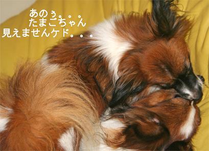 yuzu060919-5.jpg