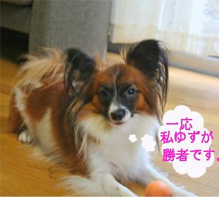 yuzu060919-6.jpg