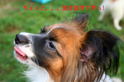 yuzu060919-8.jpg