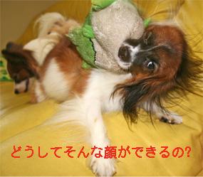 yuzu060919-9.jpg