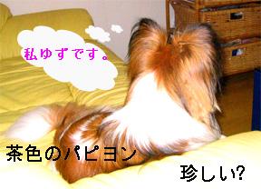 yuzu060920-1.jpg