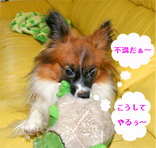 yuzu060920-2.jpg