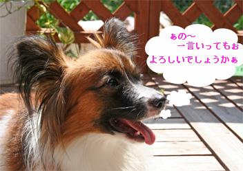 yuzu060921-1.jpg