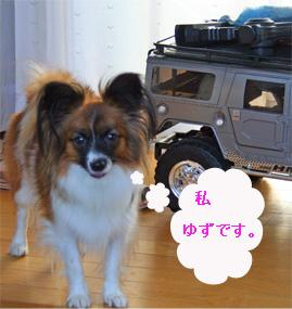 yuzu0609229-1.jpg