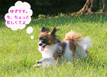 yuzu060924-3.jpg