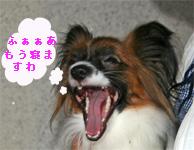 yuzu060924-7.jpg