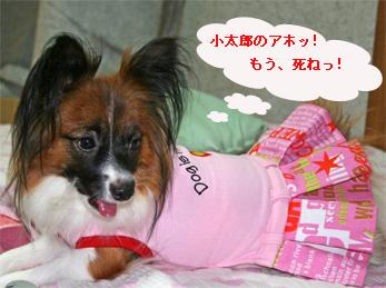 yuzu060925-10.jpg