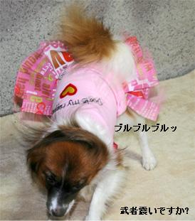 yuzu060925-5.jpg