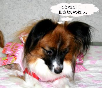 yuzu060925-9.jpg
