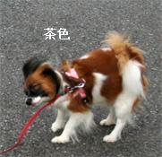 yuzu060926-10.jpg