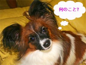 yuzu060926-5.jpg