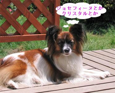 yuzu060926-6.jpg