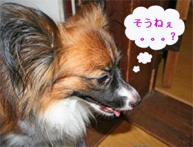 yuzu060926-8.jpg