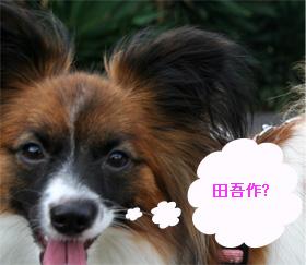 yuzu060926-9.jpg