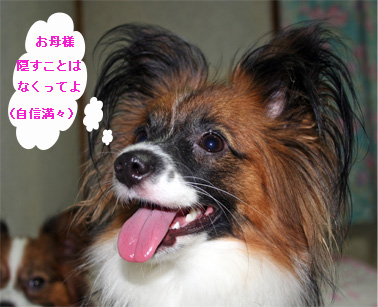 yuzu060927-1.jpg