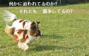 yuzu060927-10.jpg