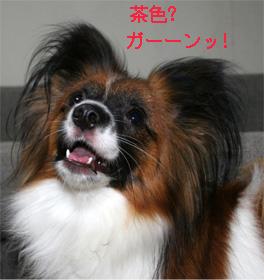 yuzu060927-2.jpg