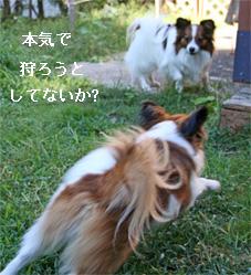 yuzu060928-1.jpg