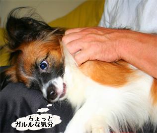 yuzu060930-11.jpg
