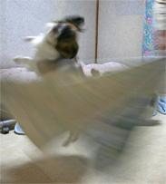 yuzu061002-3.jpg