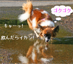 yuzu061003-2.jpg