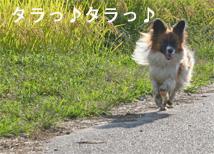 yuzu061003-4.jpg
