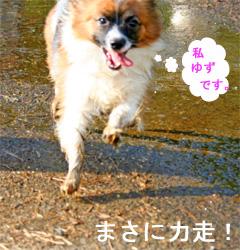 yuzu061003-5.jpg