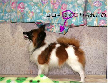 yuzu061003-6.jpg