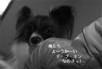 yuzu061004-1.jpg