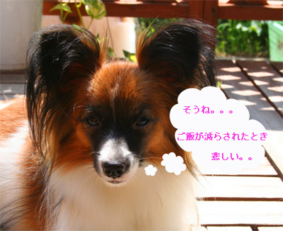 yuzu061004-4.jpg