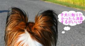 yuzu061006-1.jpg