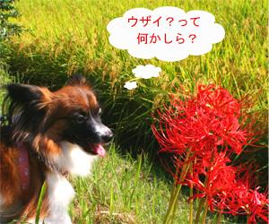yuzu061006-2.jpg