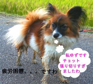 yuzu061007-1.jpg